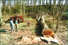 Skidder extraction of timber from a woodland thinning operation