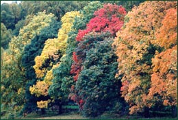 Trees can add variety and beauty to a landscape