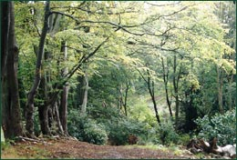 Woodland paths provide a tranquil haven for recreation