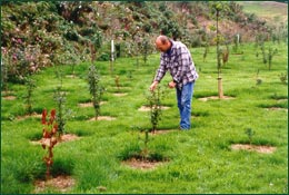 Weed control and woodland establishment