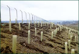 Woodland Planting of Reclaimed Land