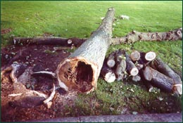 Stem rot of trees lead to collapse causing damage or injury