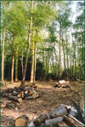 Woodland thinning and its benefits